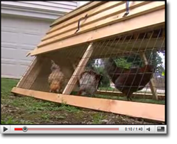 Backyard Chickens :: Originally shown on NBC-17 News 07/11/2008